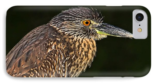 Baby Face - Yellow-crowned Night Heron  IPhone Case by HH Photography of Florida