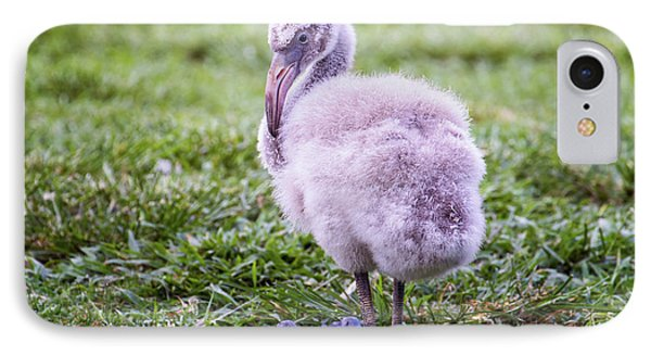 Baby Flamingo Sitting IPhone Case by Stephanie Hayes
