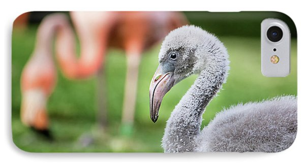 Baby Flamingo With Mom In Background IPhone Case by Stephanie Hayes