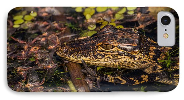 Baby Gator And Mayflies IPhone Case by Zina Stromberg