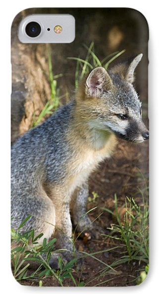 Baby Gray Fox Resting On Bluff Side IPhone Case