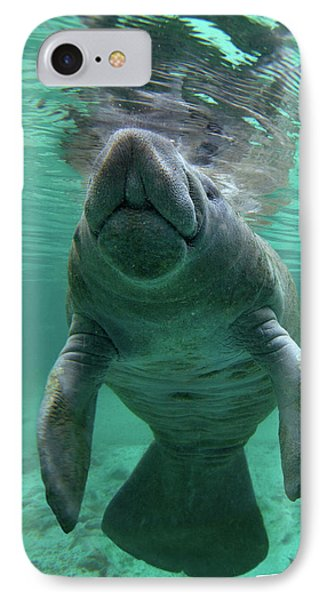 Baby Manatee IPhone Case by Tim Fitzharris