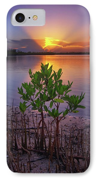 Baby Mangrove Sunset At Indian River State Park IPhone Case by Justin Kelefas