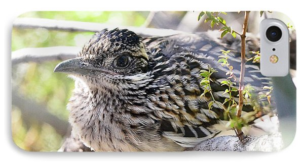 Baby Roadrunner  IPhone Case by Saija Lehtonen