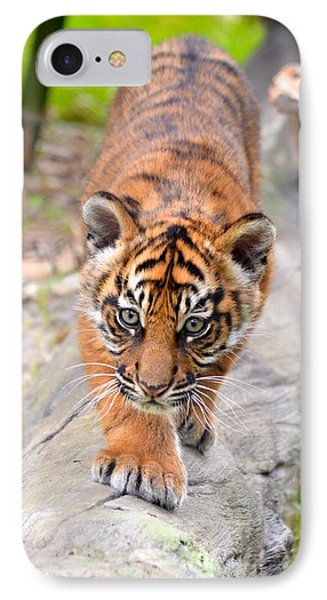 Baby Sumatran Tiger Cub IPhone Case by Richard Bryce and Family