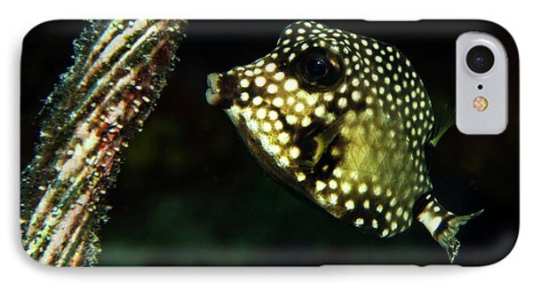 IPhone Case featuring the photograph Baby Trunk Fish by Jean Noren
