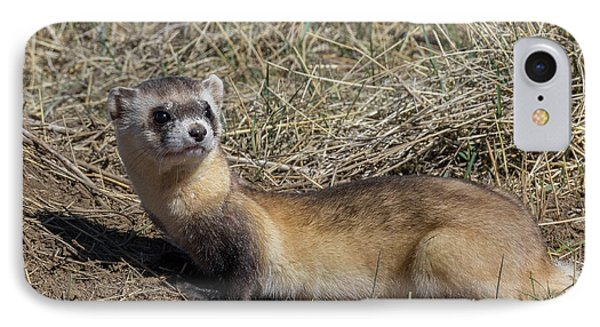 Back-footed Ferret Keeps Watch IPhone Case