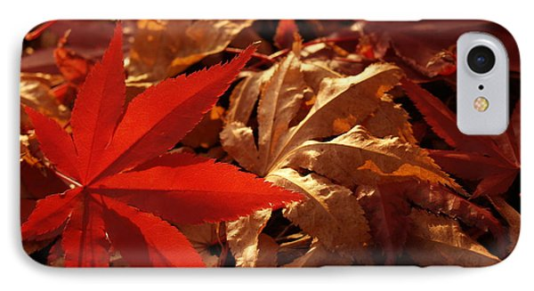 Back-lit Japanese Maple Leaf On Dried Leaves Phone Case by Anna Lisa Yoder