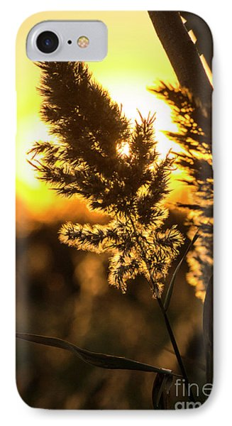 IPhone Case featuring the photograph Backlit By The Sunset by Zawhaus Photography