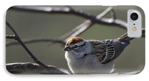 IPhone Case featuring the photograph Backlit Chipping Sparrow by Susan Capuano