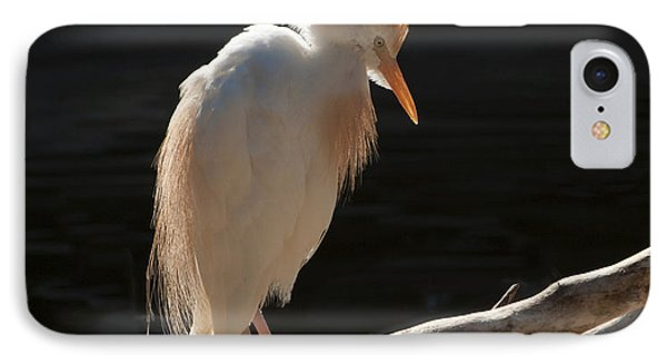 Backlit Egret IPhone Case by Sandra Bronstein