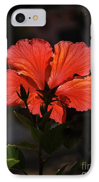IPhone Case featuring the photograph Backlit Hibiscus by Robert Bales