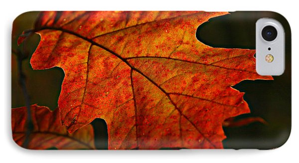 IPhone Case featuring the photograph Backlit Leaf by Shari Jardina