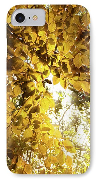 Backlit Leaves IPhone Case by Wim Lanclus