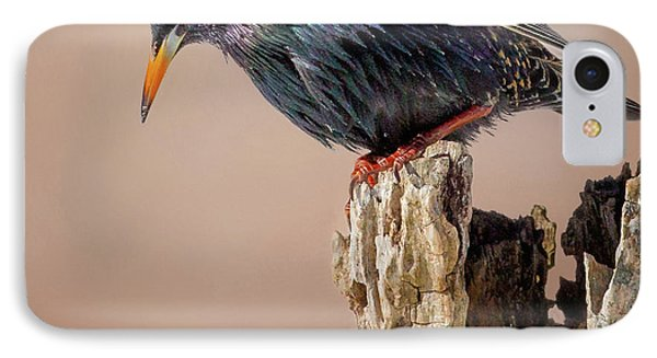 Backyard Birds European Starling Square IPhone Case by Bill Wakeley