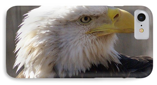Bald Eagle 3 Phone Case by Marty Koch
