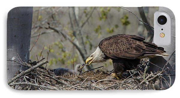 Bald Eagle Feeding IPhone Case by Ann Bridges
