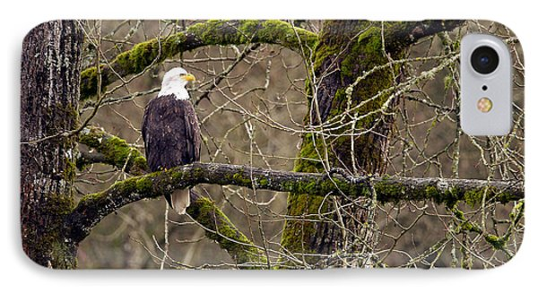Bald Eagle On Mossy Branch Phone Case by Sharon Talson