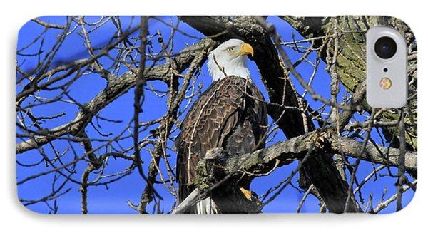 IPhone Case featuring the photograph Bald Eagle by Paula Guttilla
