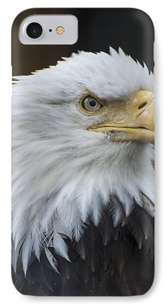 Bald Eagle Portrait IPhone 7 Case