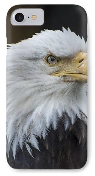 Bald Eagle Portrait IPhone Case by Gary Lengyel