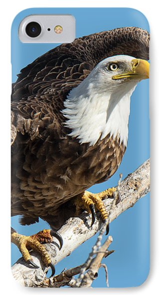 Bald Eagle Ready To Launch IPhone Case