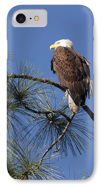 IPhone Case featuring the photograph Bald Eagle by Sally Weigand
