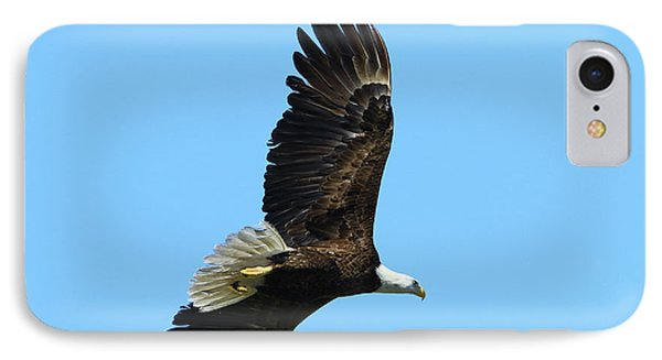 IPhone Case featuring the photograph Bald Eagle Series IIi by Deborah Benoit