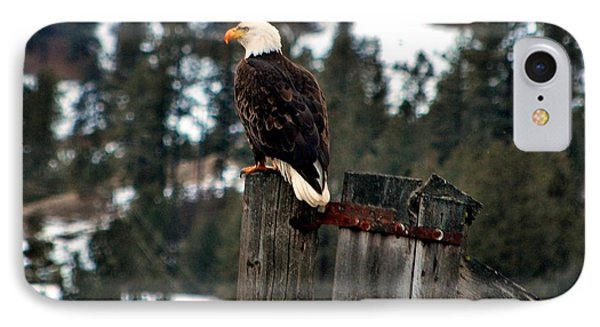 Baldy On A Post Phone Case by Don Mann