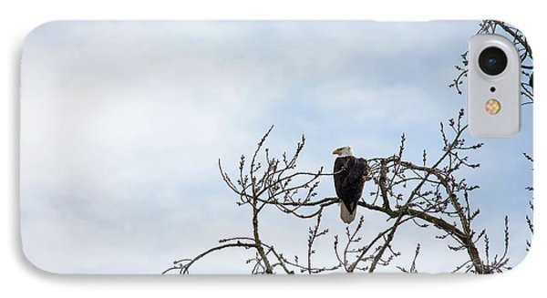 IPhone Case featuring the photograph Balk Eagle by Rebecca Cozart
