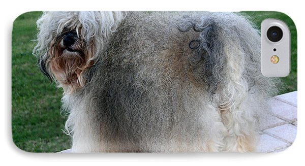 ball of fur Havanese dog IPhone Case by Sally Weigand