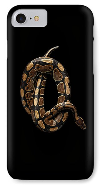 Ball Or Royal Python Snake On Isolated Black Background IPhone Case by Sergey Taran