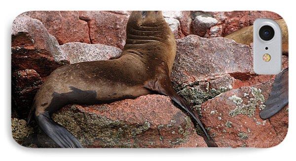 IPhone Case featuring the photograph Ballestas Island Fur Seals by Aidan Moran