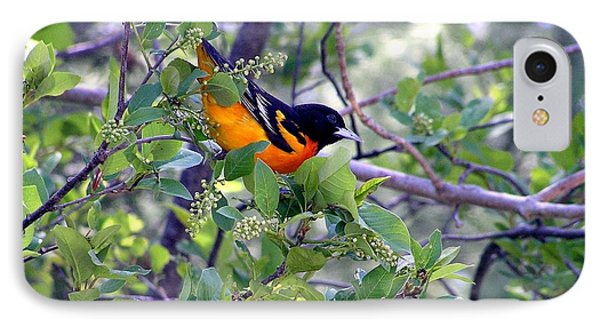 Baltimore Northern Oriole IPhone Case by Susan  Dimitrakopoulos