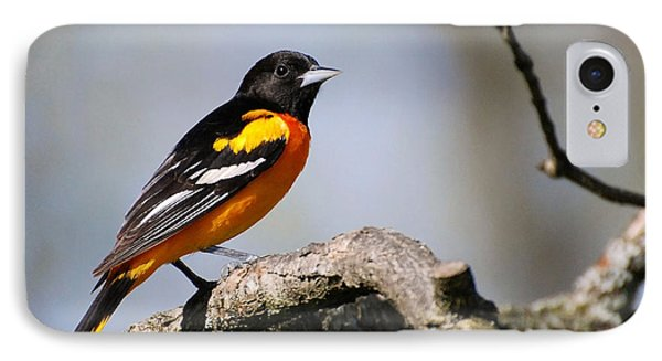 Baltimore Oriole IPhone Case by Christina Rollo
