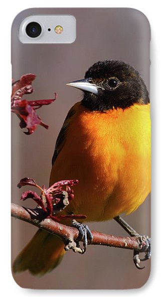 Oriole iPhone 7 Case - Baltimore Oriole II by Bruce J Robinson