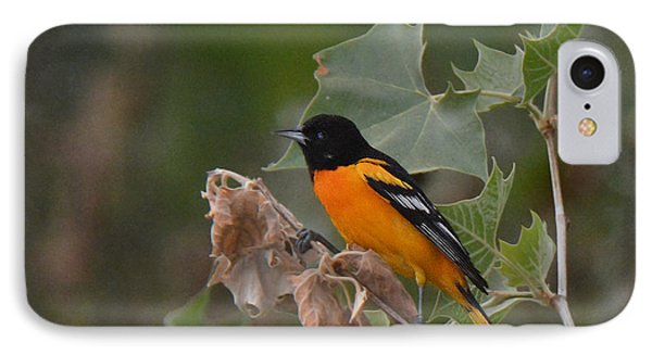 Baltimore Oriole In Sycamore Tree IPhone Case