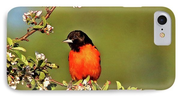 Baltimore Oriole Phone Case by James F Towne