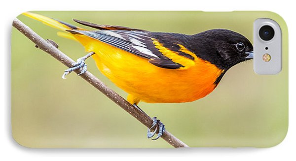 Baltimore Oriole IPhone 7 Case by Paul Freidlund