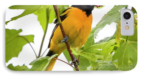 IPhone Case featuring the photograph Baltimore Oriole With Raspberry  by Ricky L Jones