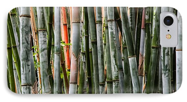 Bamboo Seduction IPhone Case by Karen Wiles