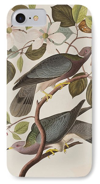 Band-tailed Pigeon  IPhone Case by John James Audubon