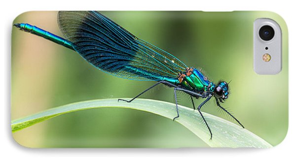 Banded Demoiselle IPhone Case by Ian Hufton