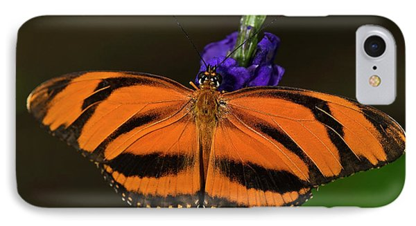 Banded Orange Butterfly IPhone Case by JT Lewis
