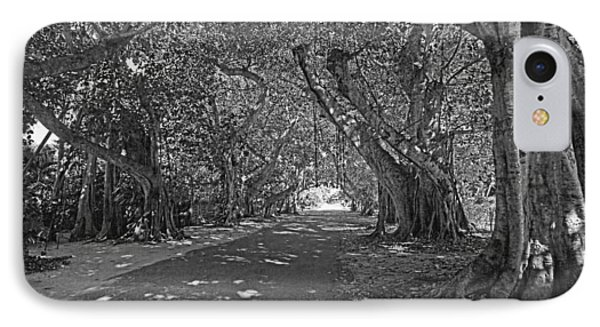 Banyan Street 2 IPhone Case by HH Photography of Florida