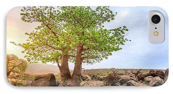 IPhone Case featuring the photograph Baobab Tree by Alexey Stiop
