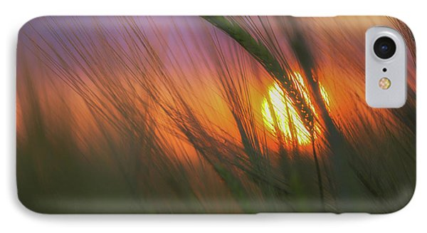 Barley Sunset IPhone Case