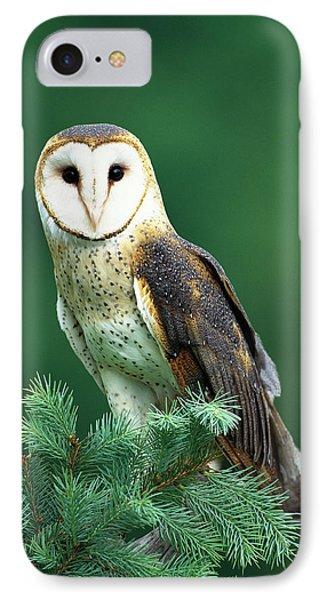 Barn Owl Tyto Alba Portrait, Hudson IPhone Case by Tom Vezo