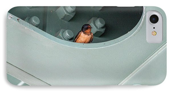 Barn Swallow Looking Out From Nest IPhone Case by Dan Friend