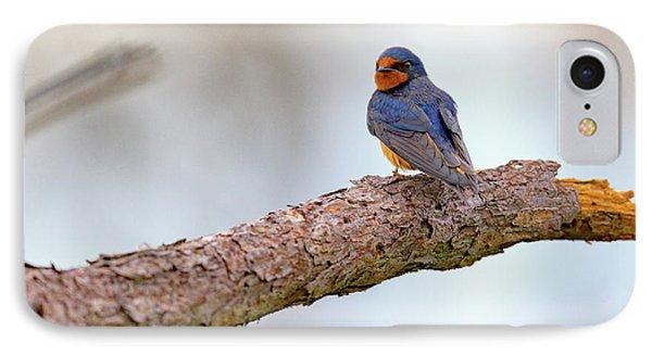 Barn Swallow On Assateague Island IPhone 7 Case